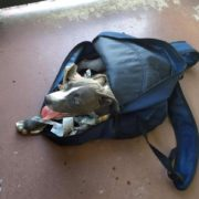 Someone abandoned a puppy in a backpack