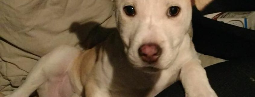 Puppy beaten with a flashlight