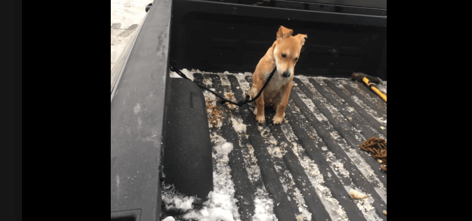 Puppy in the bed of a truck in freezing weather