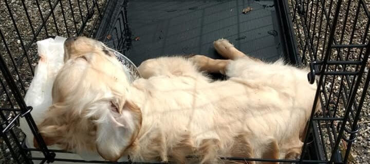Puppy found in cage submerged in the water