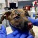 Puppy burned after crate set on fire
