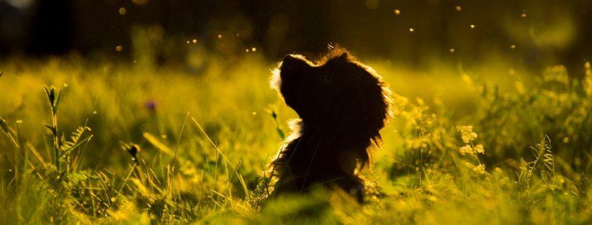 Cruelty case, puppy decapitated