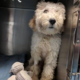 Puppy died from cardiac arrest after being shot