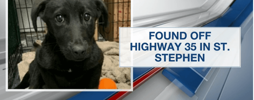 Young puppy died after being shot