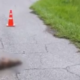 Investigation, puppy possibly dragged to death