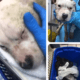Puppy abandoned in trash bag has died