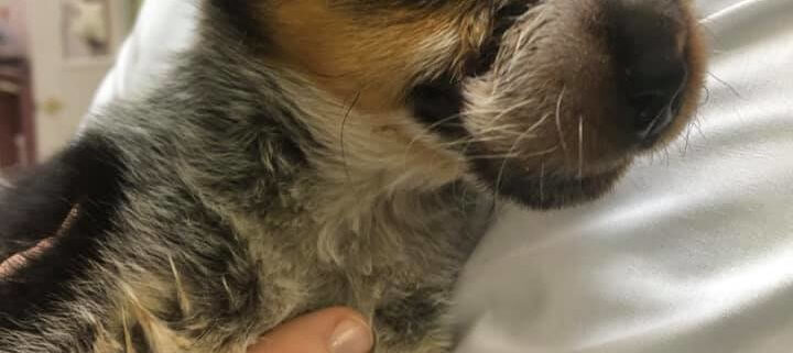 Rubber band placed around puppy's muzzle