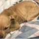 Puppy found abandoned in trash bag