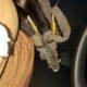 Puppy found with pencils on broken legs