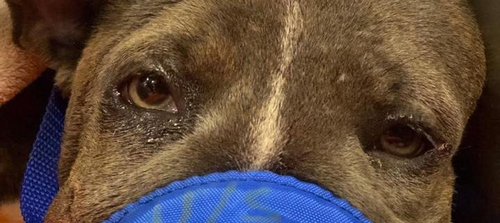 Puppy with fractured skull found on sidewalk