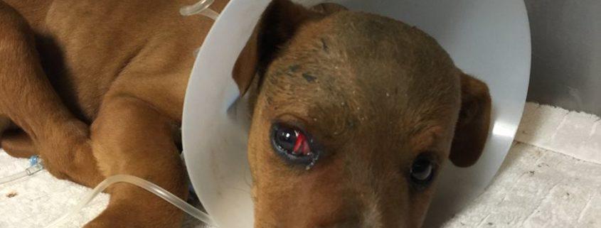 Injured puppy found
