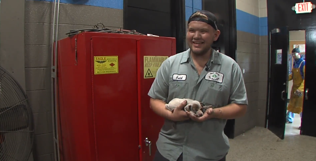 Puppy rescued from car engine
