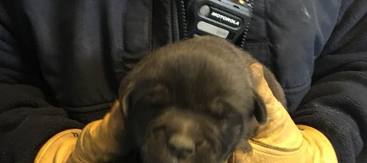 puppy rescued from vent