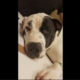 Puppy fatally shot after chewing a shoe