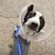 Puppy injured after being repeatedly slammed to the ground