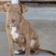Puppy stolen at gunpoint