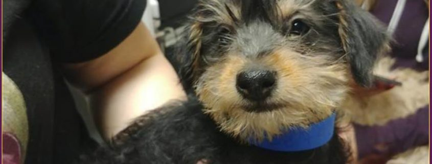 Puppy stolen from shelter