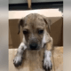 Puppy thrown into dumpster
