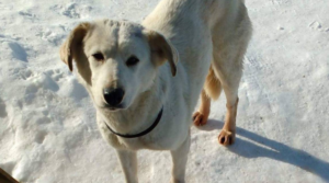 rescue dog shot at airport