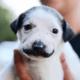 Rescue pup breaks the internet