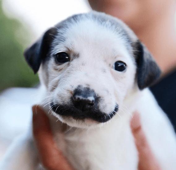 Meet the mustache rescue puppy who broke the internet • Pet Rescue