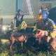 Rescue van crashed