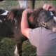 Rescued pony hugs man who rescued him