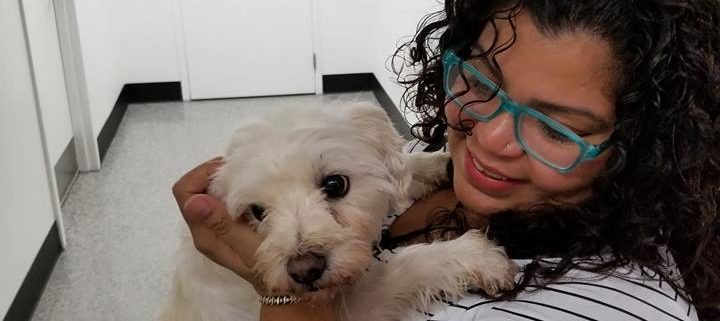 Missing dog reunited with owner after four years