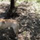 Reward - dog tied to a tree euthanized 2 wks later