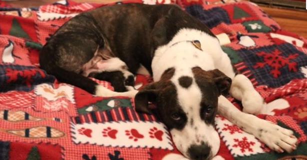 Reward offered in puppy cruelty case