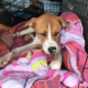 Reward offered for injured abandoned dog