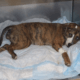Reward offered - puppy abused
