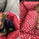 Reward - puppy thrown from moving vehicle