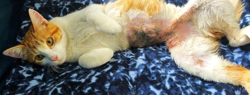 Reward offered for whoever tortured and burned cat