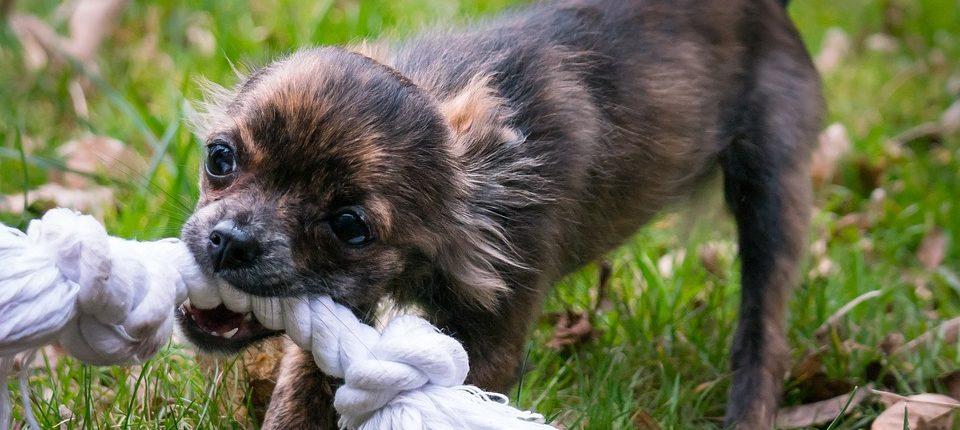 Facebook user warns about danger of dog toy
