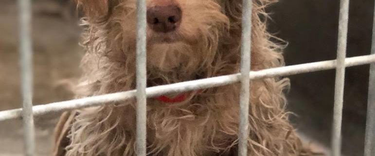 Sad, matted and scared stray hidden from public view