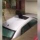 Dog too terrified to save