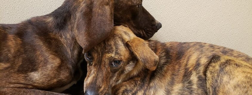 Scared Dogs Have To Be Carried Outside By Shelter Volunteers Pet Rescue Report