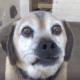 Senior dog cast aside