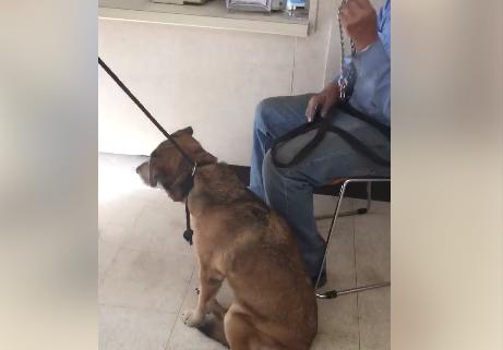 Senior surrenders elderly dog