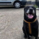 Senior dog abandoned for not learning to be good