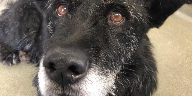 senior dog past deadline and at risk