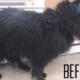 Senior dog cries for family who surrendered him