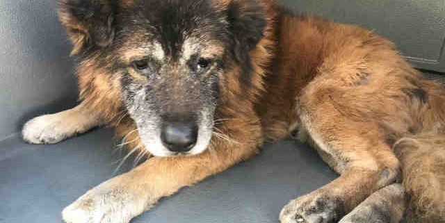 Senior dog hidden in quarantine