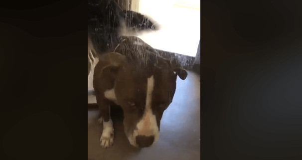 Senior dog seems to know that nobody is coming