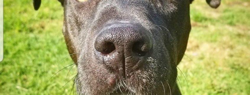Senior dog on red alert