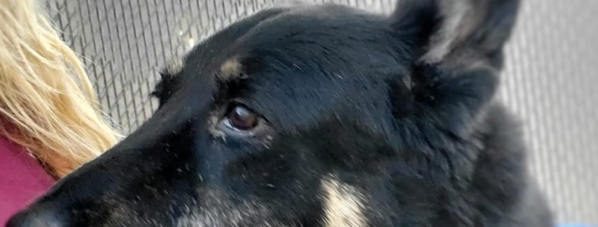 Senior dog out of time at busy animal control agency