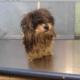 Senior dog surrendered after owner died