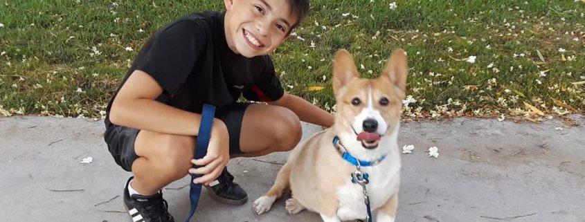 New life for senior dog dumped by former family