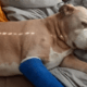 Senior dog shot protecting owner
